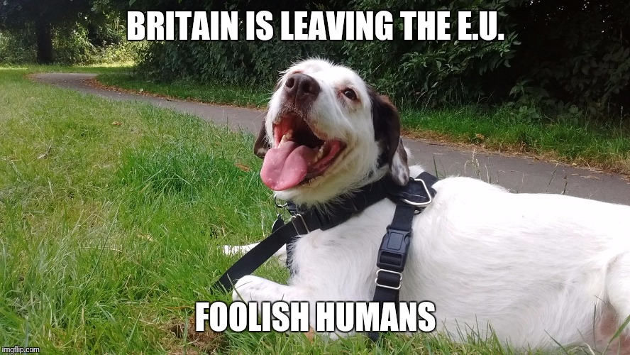 BRITAIN IS LEAVING THE E.U. FOOLISH HUMANS | image tagged in x is y | made w/ Imgflip meme maker