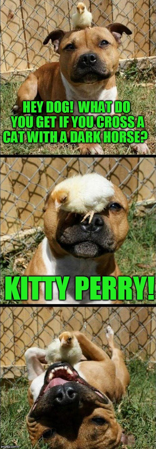 New Dashhopes template!  https://imgflip.com/memetemplate/108289252/Serious-chick-puns | HEY DOG!  WHAT DO YOU GET IF YOU CROSS A CAT WITH A DARK HORSE? KITTY PERRY! | image tagged in serious chick puns | made w/ Imgflip meme maker