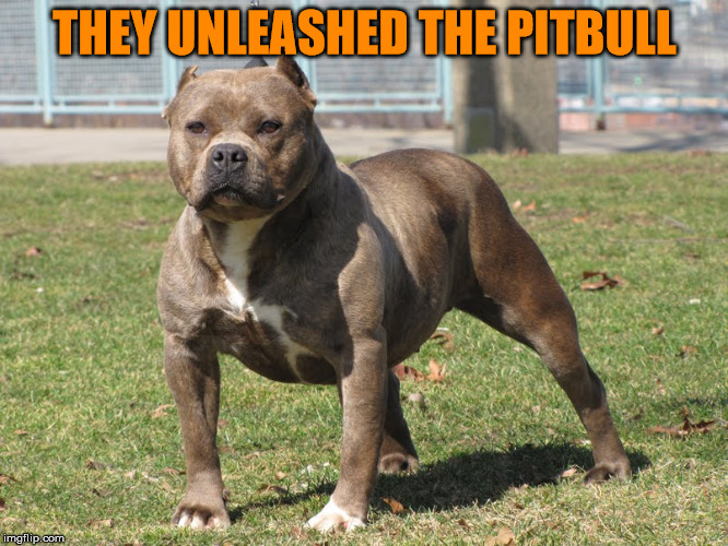THEY UNLEASHED THE PITBULL | made w/ Imgflip meme maker