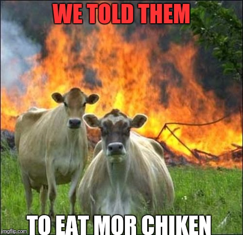Evil Cows Meme | WE TOLD THEM TO EAT MOR CHIKEN | image tagged in memes,evil cows | made w/ Imgflip meme maker