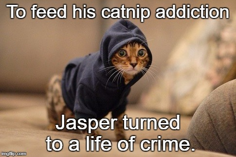 Hoody Cat Meme | To feed his catnip addiction Jasper turned to a life of crime. | image tagged in memes,hoody cat | made w/ Imgflip meme maker