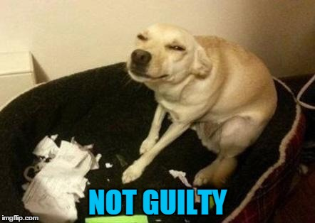 NOT GUILTY | made w/ Imgflip meme maker