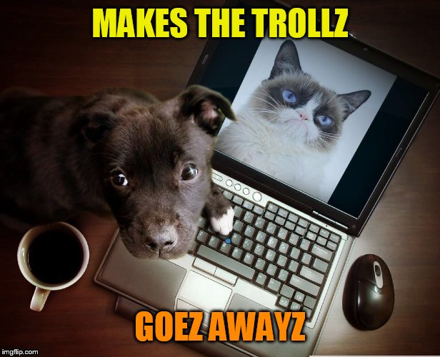 MAKES THE TROLLZ GOEZ AWAYZ | image tagged in trolls,coolermommy20,sad puppy,where did she go | made w/ Imgflip meme maker