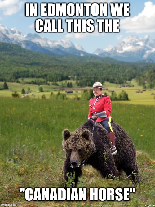 "Canada | IN EDMONTON WE CALL THIS THE ""CANADIAN HORSE"" 