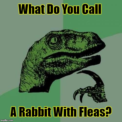 Can You Guess? (✿◠‿◠) Riddle Weekend! A Craziness_all_the_way And Socrates Event! July 14th-16th | What Do You Call A Rabbit With Fleas? | image tagged in memes,philosoraptor,riddles and brainteasers,riddle weekend,socrates,craziness_all_the_way | made w/ Imgflip meme maker