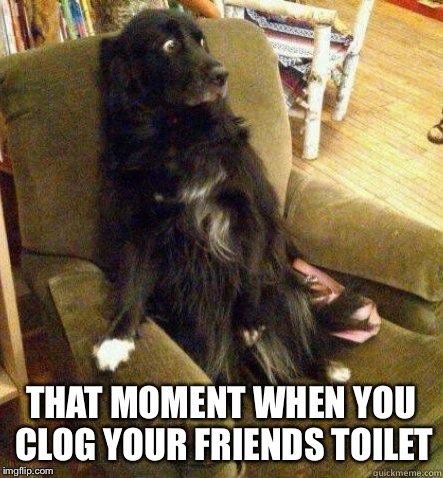 terrified dog | THAT MOMENT WHEN YOU CLOG YOUR FRIENDS TOILET | image tagged in terrified dog | made w/ Imgflip meme maker