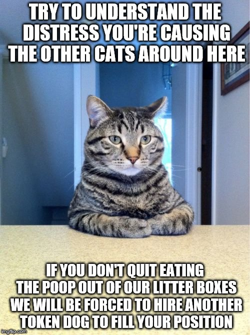 Take A Seat Cat Meme | TRY TO UNDERSTAND THE DISTRESS YOU'RE CAUSING THE OTHER CATS AROUND HERE IF YOU DON'T QUIT EATING THE POOP OUT OF OUR LITTER BOXES WE WILL B | image tagged in memes,take a seat cat | made w/ Imgflip meme maker