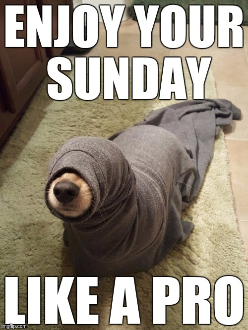 Sunday Ops | ENJOY YOUR SUNDAY LIKE A PRO | image tagged in sunday,enjoy,funny,memes,dog | made w/ Imgflip meme maker