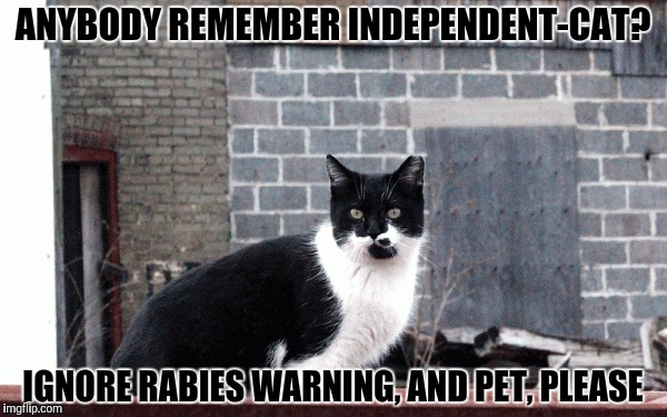 ANYBODY REMEMBER INDEPENDENT-CAT? IGNORE RABIES WARNING, AND PET, PLEASE | made w/ Imgflip meme maker
