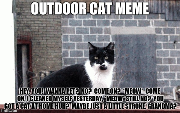 OUTDOOR CAT MEME HEY, YOU!  WANNA PET?  NO?  COME ON?  *MEOW*  COME ON, I CLEANED MYSELF YESTERDAY, *MEOW* STILL NO?  YOU GOT A CAT AT HOME  | made w/ Imgflip meme maker