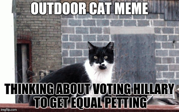 OUTDOOR CAT MEME THINKING ABOUT VOTING HILLARY TO GET EQUAL PETTING | made w/ Imgflip meme maker