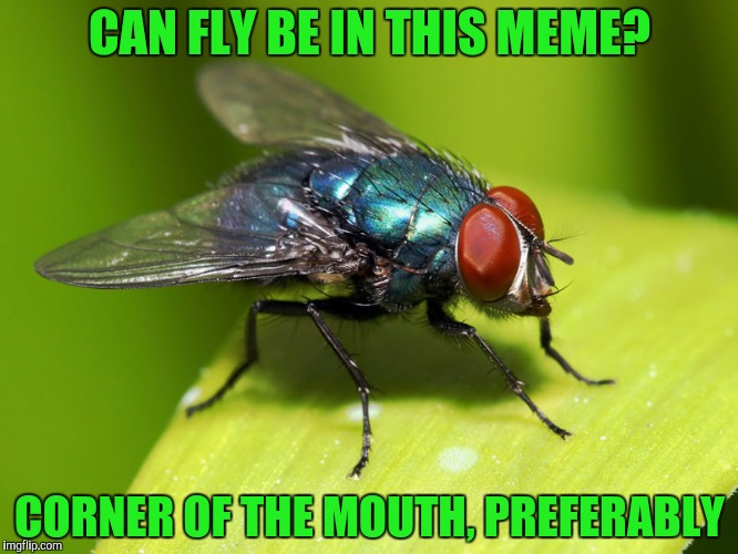 CAN FLY BE IN THIS MEME? CORNER OF THE MOUTH, PREFERABLY | made w/ Imgflip meme maker