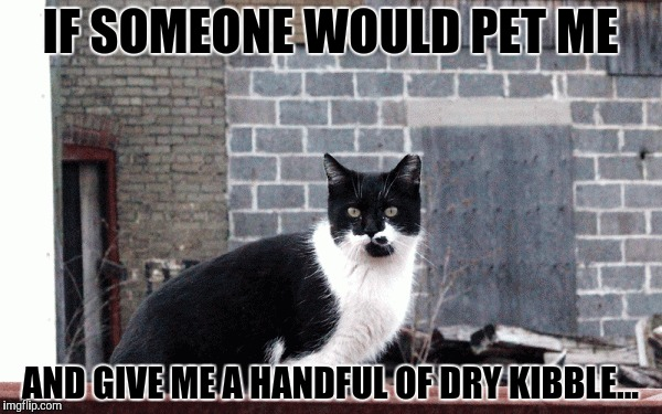 IF SOMEONE WOULD PET ME AND GIVE ME A HANDFUL OF DRY KIBBLE... | made w/ Imgflip meme maker