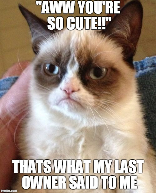 "No one can call Grumpy cute | ""AWW YOU'RE SO CUTE!!"" THATS WHAT MY LAST OWNER SAID TO ME 