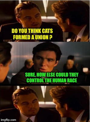 DO YOU THINK CATS FORMED A UNION ? SURE, HOW ELSE COULD THEY CONTROL THE HUMAN RACE | made w/ Imgflip meme maker