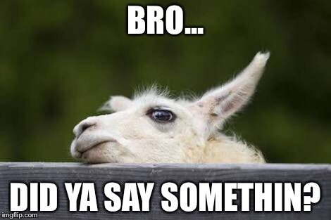 That llama though... | BRO... DID YA SAY SOMETHIN? | image tagged in suspicious,llama | made w/ Imgflip meme maker