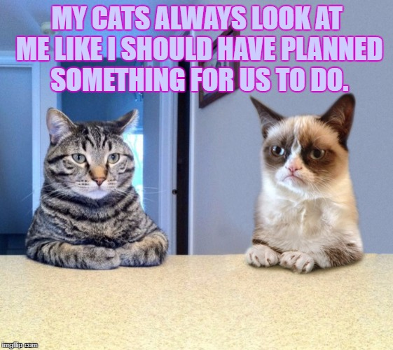 Two Grumpy Cats | MY CATS ALWAYS LOOK AT ME LIKE I SHOULD HAVE PLANNED SOMETHING FOR US TO DO. | image tagged in cats,bored,funny,funny memes,planning | made w/ Imgflip meme maker