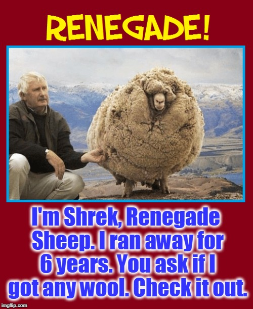 Wooly Bully | I'm Shrek, Renegade Sheep. I ran away for 6 years. You ask if I got any wool. Check it out. | image tagged in vince vance,sheep,wool,baa baa black sheep,renegade sheep,memes | made w/ Imgflip meme maker