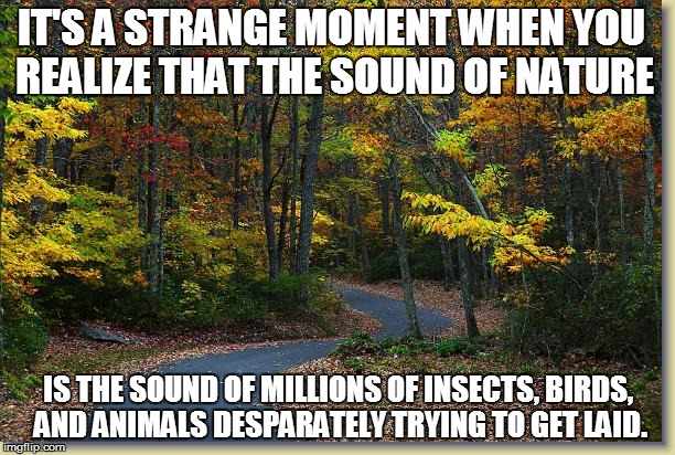 Earth Science 101 | IT'S A STRANGE MOMENT WHEN YOU REALIZE THAT THE SOUND OF NATURE IS THE SOUND OF MILLIONS OF INSECTS, BIRDS, AND ANIMALS DESPARATELY TRYING T | image tagged in funny | made w/ Imgflip meme maker