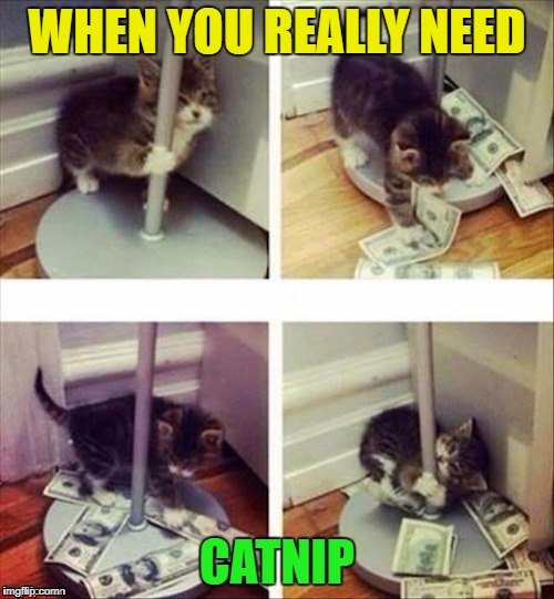Stolen from DashHopes out of my comment stream. Stolen Memes week...An AndrewFinlayson event | WHEN YOU REALLY NEED CATNIP | image tagged in cat pole dancer,memes,stolen,stolen memes week,funny,andrewfinlayson | made w/ Imgflip meme maker