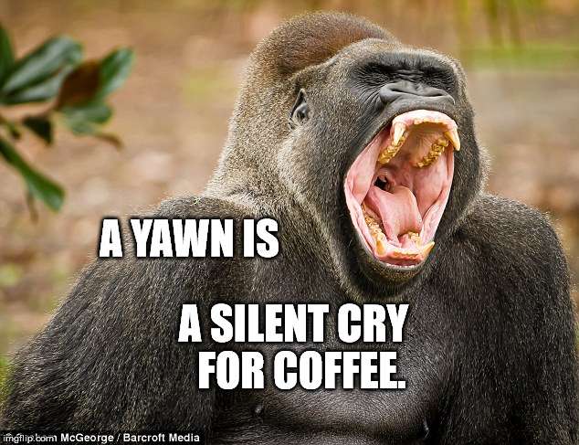 I'm not Yawning | A YAWN IS A SILENT CRY  FOR COFFEE. | image tagged in i'm not yawning | made w/ Imgflip meme maker