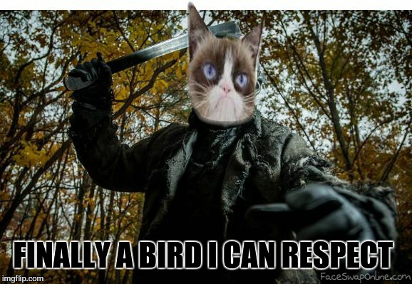 grumpy cat jason | FINALLY A BIRD I CAN RESPECT | image tagged in grumpy cat jason | made w/ Imgflip meme maker