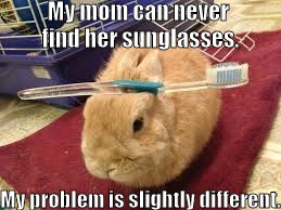 My mom can never find her sunglasses. My problem is slightly different. | image tagged in bunny | made w/ Imgflip meme maker