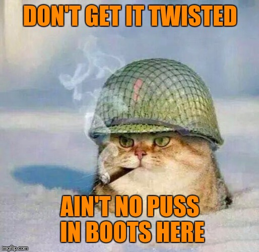 War Cat | DON'T GET IT TWISTED AIN'T NO PUSS IN BOOTS HERE | image tagged in war cat | made w/ Imgflip meme maker