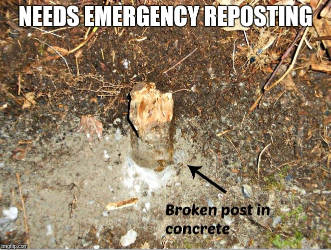 NEEDS EMERGENCY REPOSTING | made w/ Imgflip meme maker