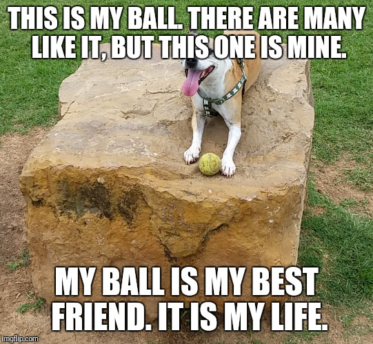 THIS IS MY BALL. THERE ARE MANY LIKE IT, BUT THIS ONE IS MINE. MY BALL IS MY BEST FRIEND. IT IS MY LIFE. | image tagged in rex the rock hog | made w/ Imgflip meme maker