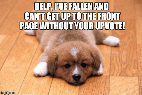 Please have a heart and help this poor puppy up to the front page!  | HELP, I'VE FALLEN AND CAN'T GET UP TO THE FRONT PAGE WITHOUT YOUR UPVOTE! | image tagged in puppy,jbmemegeek,cute puppies,upvotes,front page | made w/ Imgflip meme maker