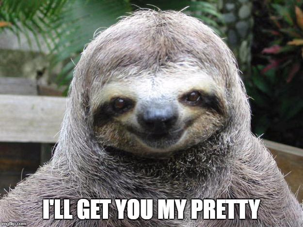 Wizard of sloths | I'LL GET YOU MY PRETTY | image tagged in sloths | made w/ Imgflip meme maker