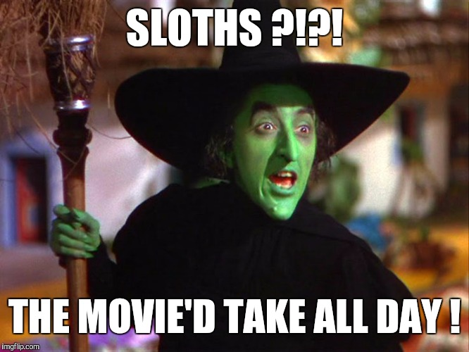 Memes | SLOTHS ?!?! THE MOVIE'D TAKE ALL DAY ! | image tagged in memes | made w/ Imgflip meme maker