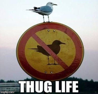 Stolen Memes Week™ an AndrewFinlayson event July 17-24. I hope anonymous gets it.  Thanks anonymous! | THUG LIFE | image tagged in bird on sign,thug life,stolen memes week,anonymous,the definition of meme,imgflip community | made w/ Imgflip meme maker