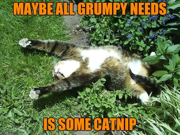 MAYBE ALL GRUMPY NEEDS IS SOME CATNIP | made w/ Imgflip meme maker