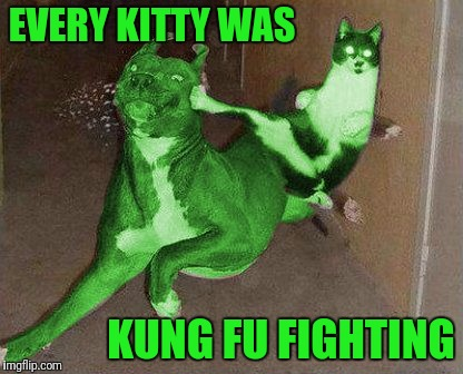 Stolen Memes Week™ an AndrewFinlayson event July 17-24.  RayCat gets it, thanks RayCat! Those cats were fast as lightning! | EVERY KITTY WAS KUNG FU FIGHTING | image tagged in raycat kicking raydog,stolen memes week,it's not stolen it's not a repost it's a meme,memes,thanks raycat,raycat is awesome | made w/ Imgflip meme maker