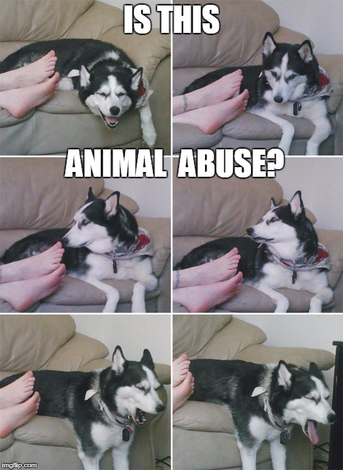 Stinky | IS THIS ANIMAL  ABUSE? | image tagged in stinky | made w/ Imgflip meme maker