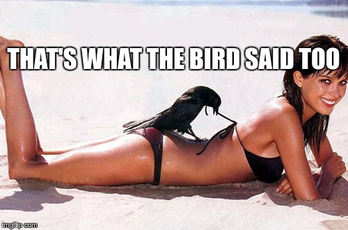 THAT'S WHAT THE BIRD SAID TOO | made w/ Imgflip meme maker