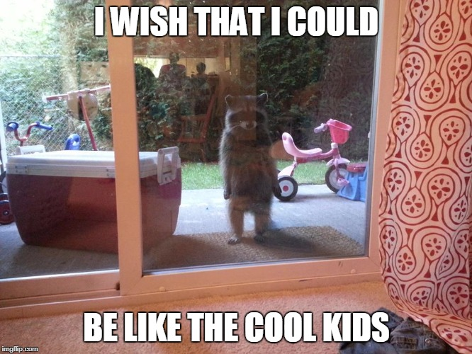 Sad Raccoons Be Like...  | I WISH THAT I COULD BE LIKE THE COOL KIDS | image tagged in cool kids,sad | made w/ Imgflip meme maker