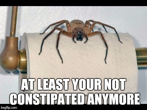 Laxative Spider | AT LEAST YOUR NOT CONSTIPATED ANYMORE | image tagged in memes,spider,comedy | made w/ Imgflip meme maker