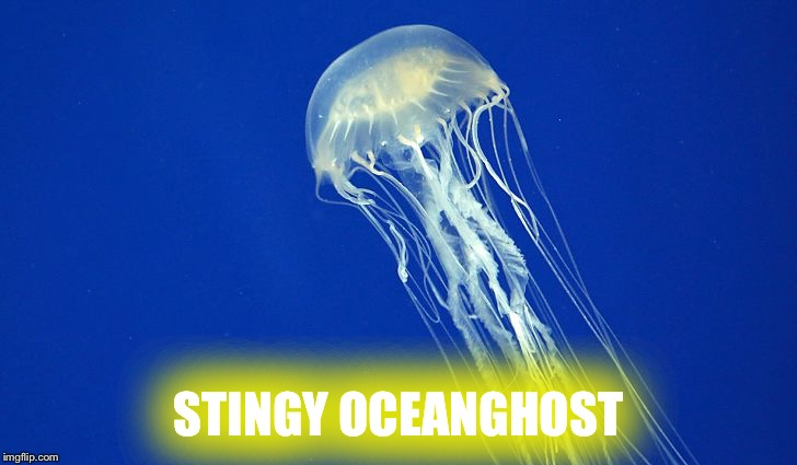 STINGY OCEANGHOST | image tagged in jellyfish | made w/ Imgflip meme maker