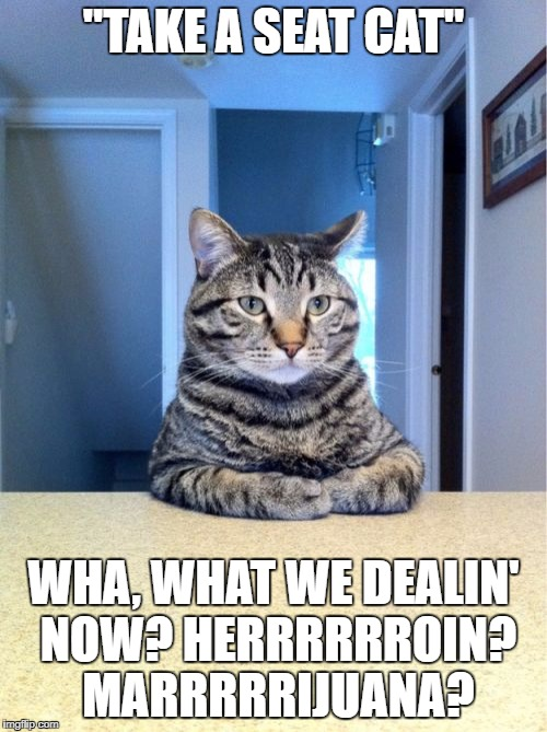 "Take A Seat Cat Meme | ""TAKE A SEAT CAT"" WHA, WHAT WE DEALIN' NOW? HERRRRRROIN? MARRRRRIJUANA? 