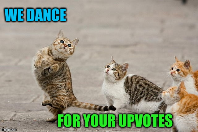 WE DANCE FOR YOUR UPVOTES | image tagged in memes,funny,cats,animals,cute,dancing | made w/ Imgflip meme maker