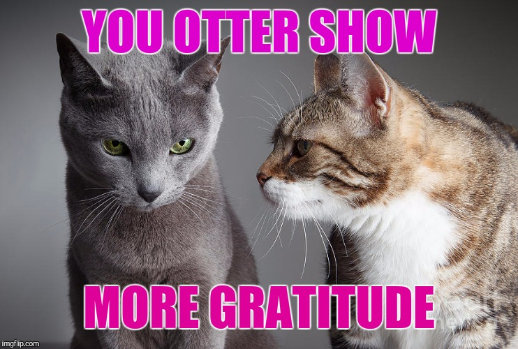 You Didn't Share ?!?! | YOU OTTER SHOW MORE GRATITUDE | image tagged in you didn't share | made w/ Imgflip meme maker