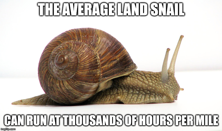 True fact | THE AVERAGE LAND SNAIL CAN RUN AT THOUSANDS OF HOURS PER MILE | image tagged in memes,snail | made w/ Imgflip meme maker