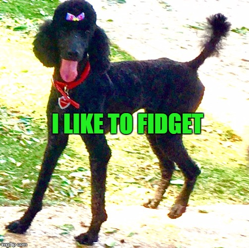 Marley Poodle | I LIKE TO FIDGET | image tagged in marley poodle | made w/ Imgflip meme maker