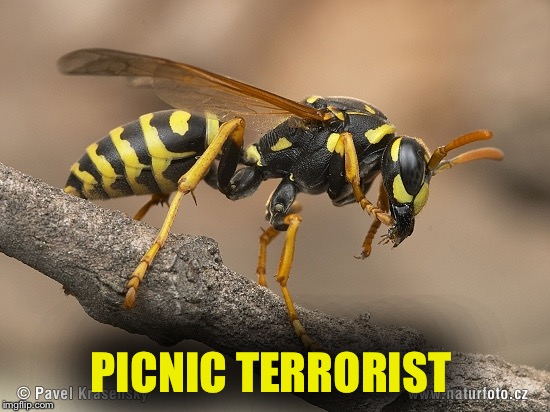 PICNIC TERRORIST | image tagged in wasp | made w/ Imgflip meme maker