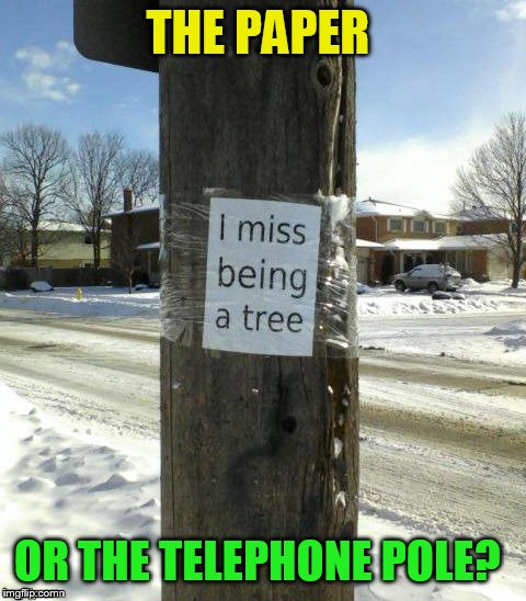 Does anyone see the irony in using a piece of paper to express your views on environmentalism? | THE PAPER OR THE TELEPHONE POLE? | image tagged in memes,telephone pole,paper,environmental protection agency,funny memes,irony | made w/ Imgflip meme maker