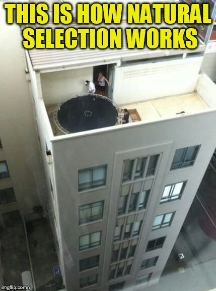 And the Darwin Award goes to... | THIS IS HOW NATURAL SELECTION WORKS | image tagged in memes,natural selection,darwin award,darwin awards,funny memes,trampoline | made w/ Imgflip meme maker