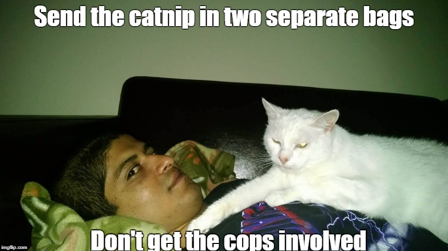 Send the catnip in two separate bags Don't get the cops involved | image tagged in cathostage | made w/ Imgflip meme maker
